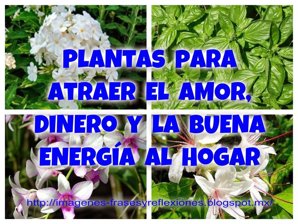 Im genes frases y reflexiones plantas que atraen el amor - Como atraer dinero y buena suerte ...