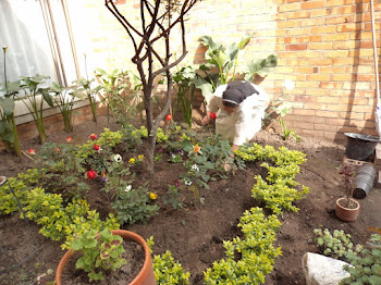 Cuidado del Jardín