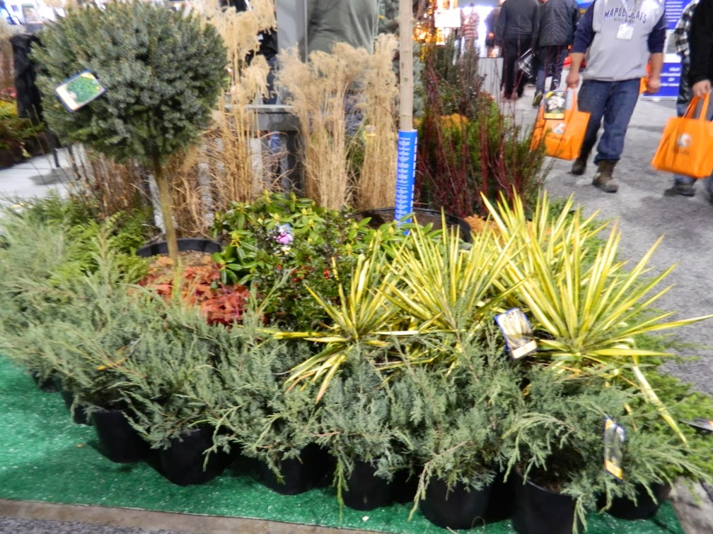 Landscape Ontario 2014 Congress yuccas junipers by garden muses-a Toronto gardening blog