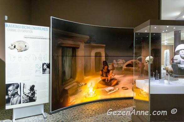 Hatay topraklarında bulunmuş biçimlendirilmiş kafatasları, arkeoloji müzesi