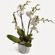 Skicka blommor billigt utomlands
