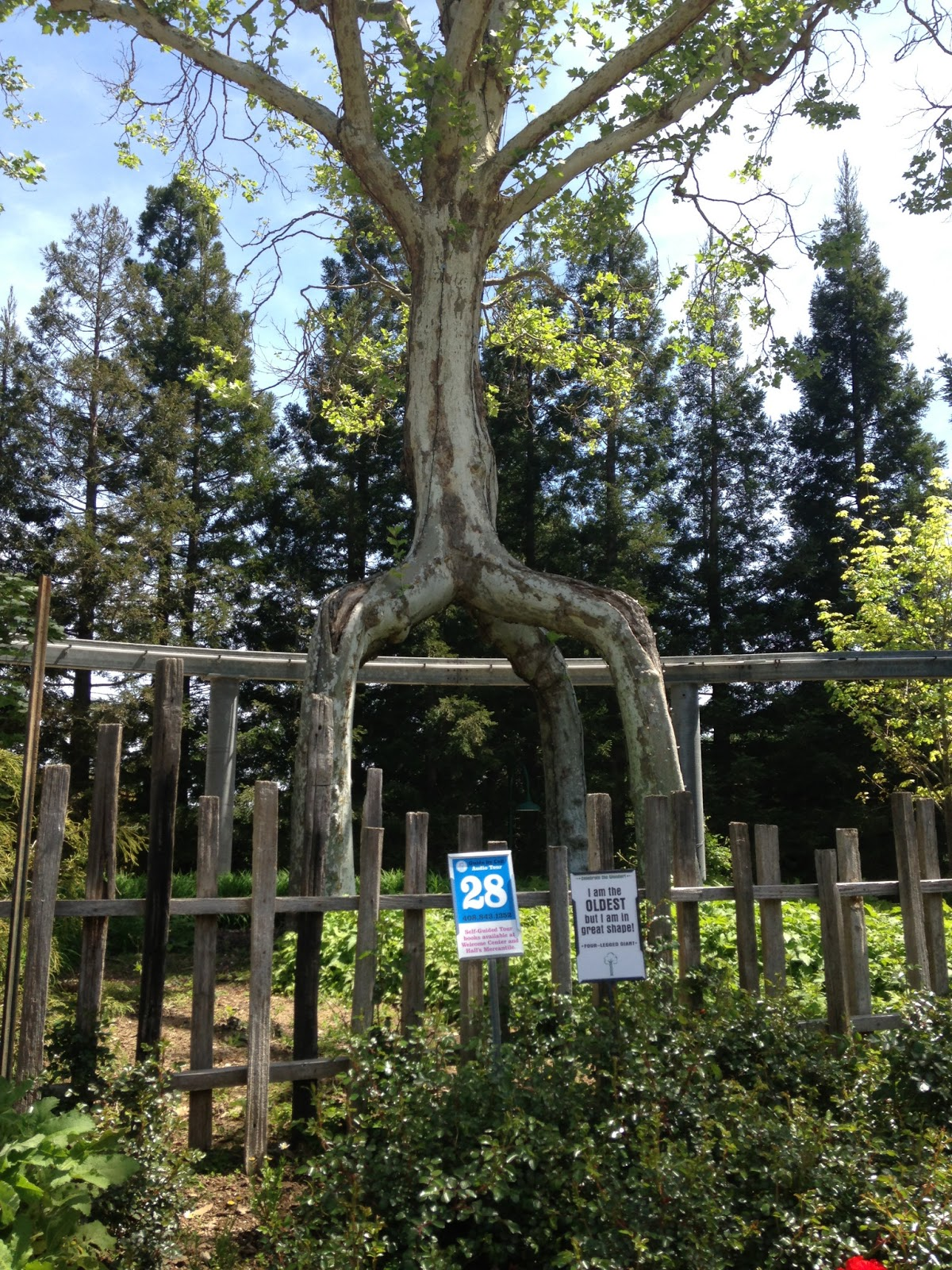 Musings Gilroy Gardens