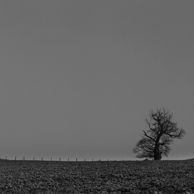 L'arbre de Fery