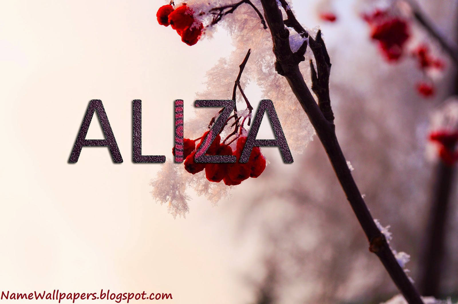aliza meaning in urdu dictionary