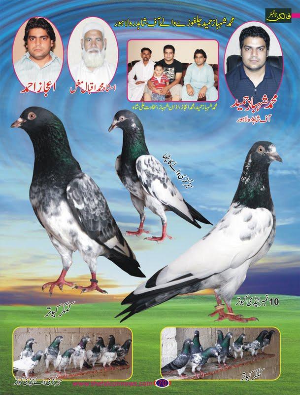 K Magazine Pigeon New Pigeons Magazine  ...