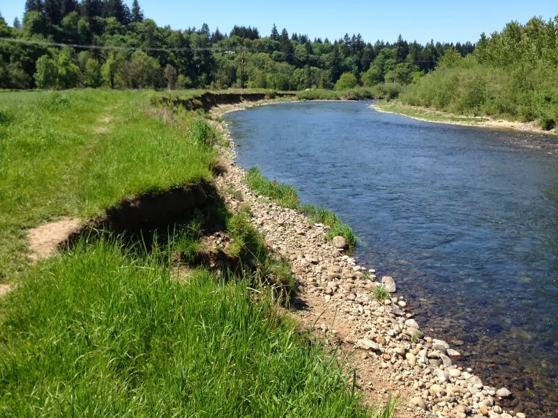 The dish on fish lower columbia fish recovery for Lewis river fishing report