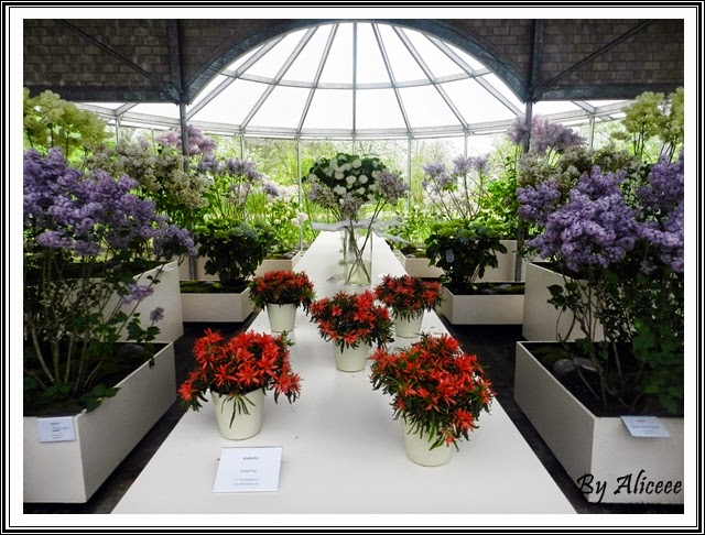 olanda-keukenhof-garden-aranjamente