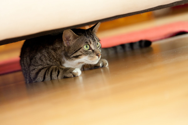 cat, cats, cat hiding, cat scared, bonfire night, tips and advice for pets fireworks night, burns pet food, burns