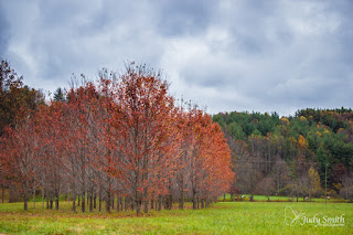 Fall Foliage, by Judy Parsons Smith