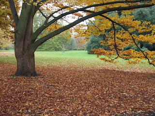 Autumn colour in landscape design. Photo by Oliver Borrow.