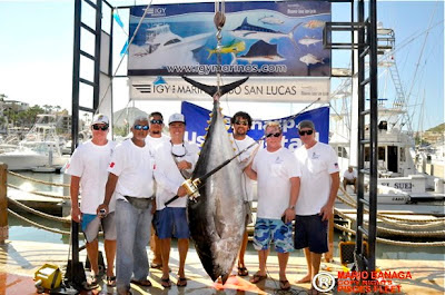 400+ lb World Record Tuna Caught
