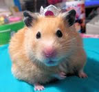 Click on the Hamster to find hairwear for Princesses