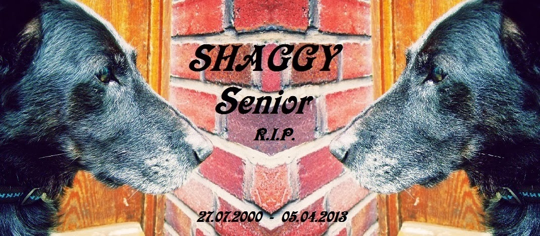 SHAGGY Senior R.I.P.