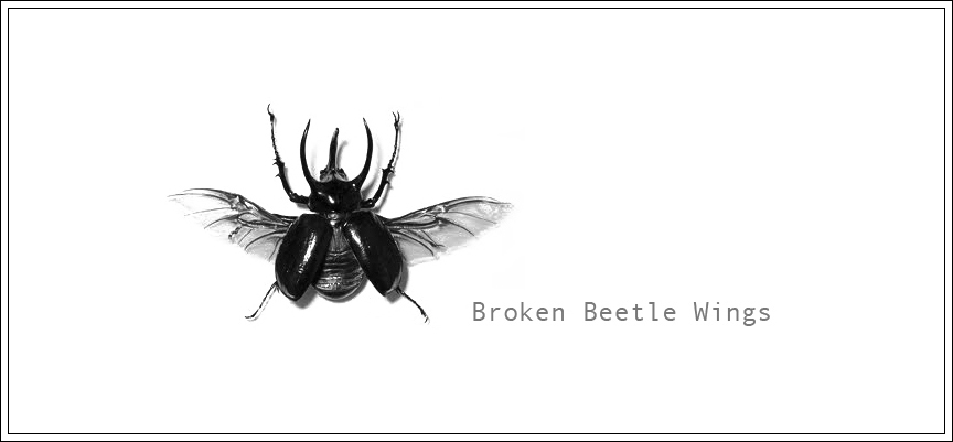Broken Beetle Wings