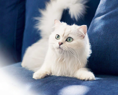 funny cat-19