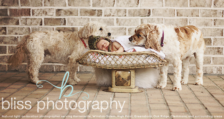 Bliss Photography - Newborn Child Family Engagement Senior Photography Kernersville NC