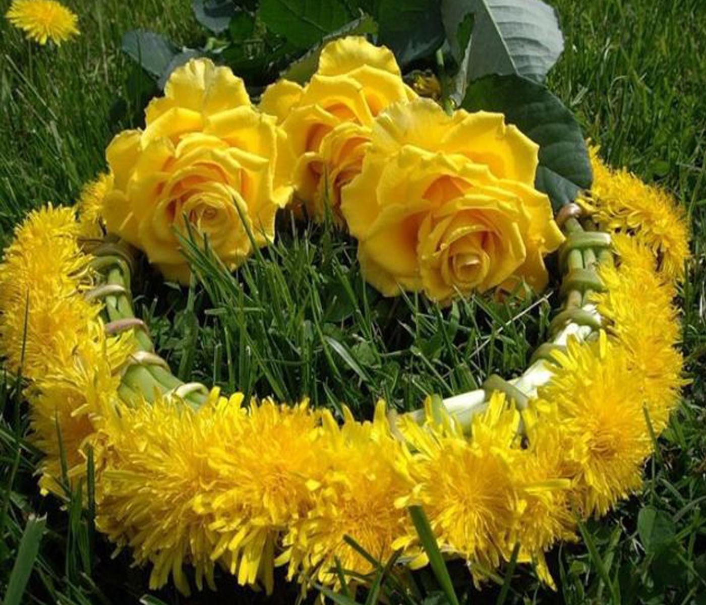 Rosas amarillas rosas hermosas y mas - Significado rosas amarillas ...
