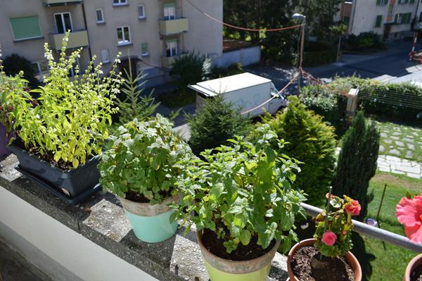 self grown herbs