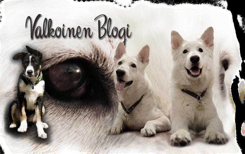 Valkoinen Blogi