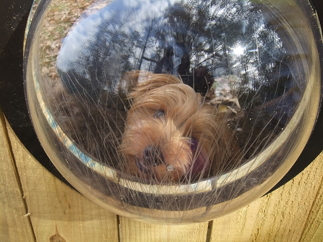 Pet Peek: janela para cachorros