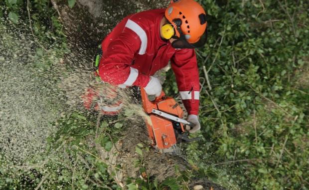 Спиливание деревьев любой сложности в Курске и Курской области.