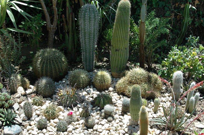 Floraciones en m laga y m s reformas en el jard n - Jardines con cactus y piedras ...