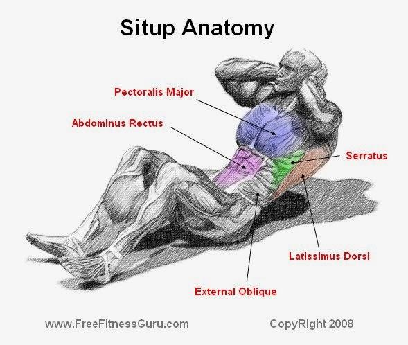 perjalanan sendiri cara membentuk otot punggung dan