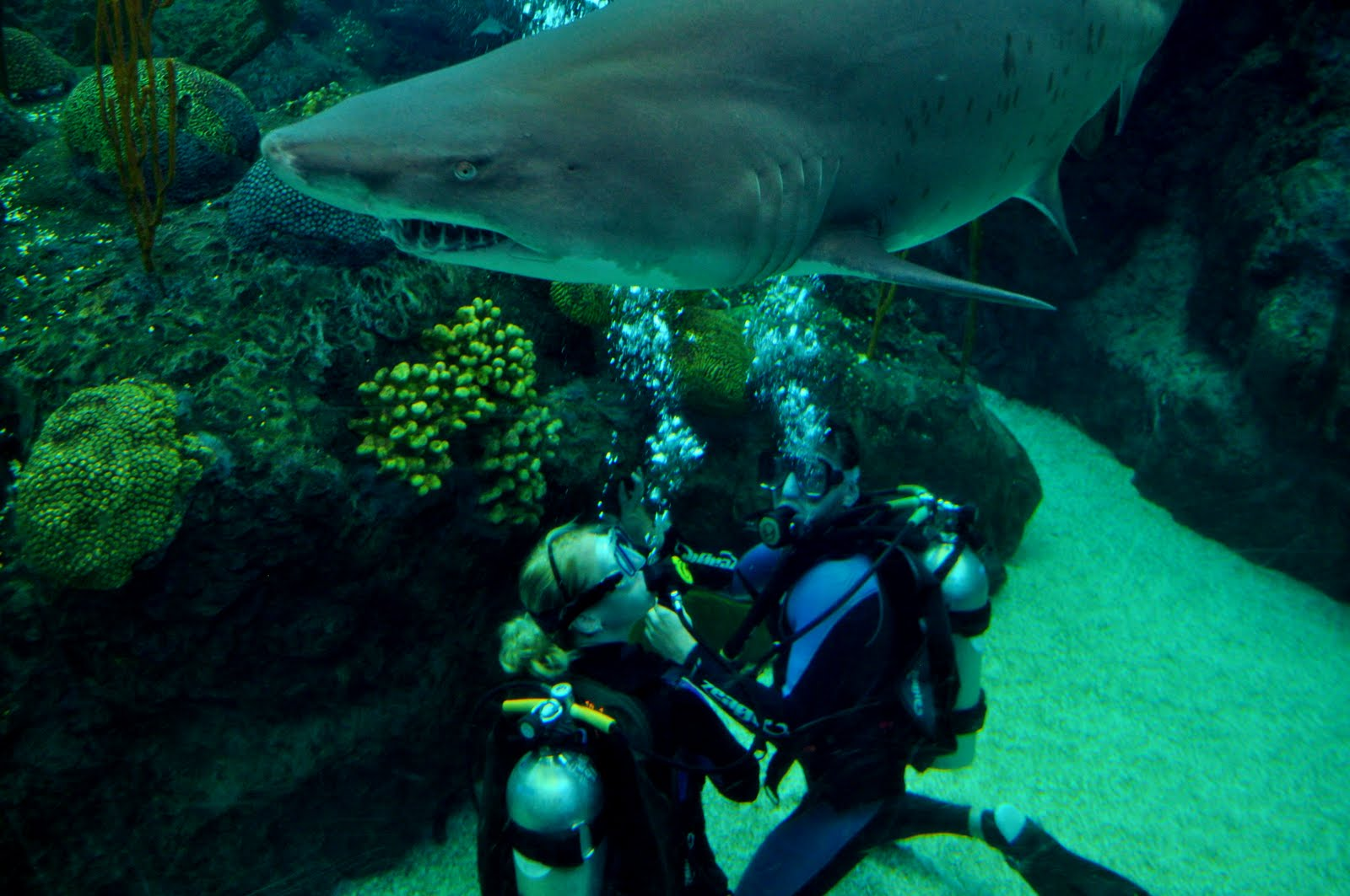 Extrahyperactive Diving With Sharks At The Florida