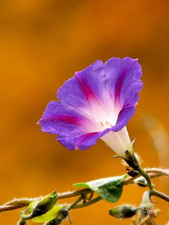 Cvijet, proljeće slike besplatne pozadine za mobitele download