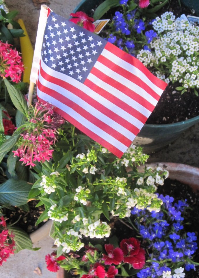 Mzteachuh summer activity red white and blue flowers for memorial day red pentas lanceolata red dianthus white alyssum blue lobelia mightylinksfo
