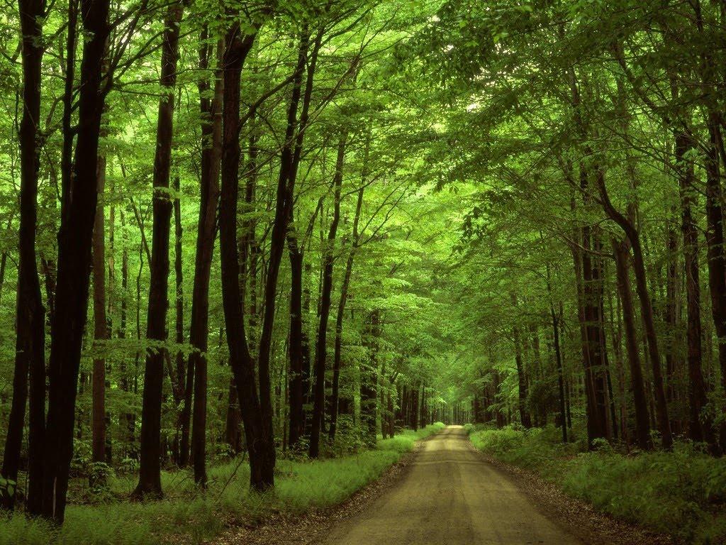 http://2.bp.blogspot.com/-O0W2Py-O_8U/T0D9MirpccI/AAAAAAAAAqM/AAbWmbQVf0I/s1600/Allegheny_National_Forest%252C_Pennsylvania.jpg