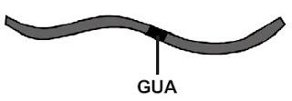 mRNA menghasilkan triplet kodon GUA (menggantikan GAA)