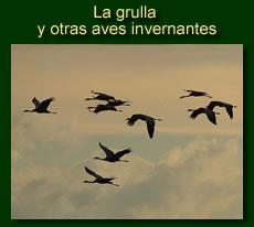 http://iberian-nature.blogspot.com.es/p/ruta-tematica-la-grulla-y-otras-aves.html