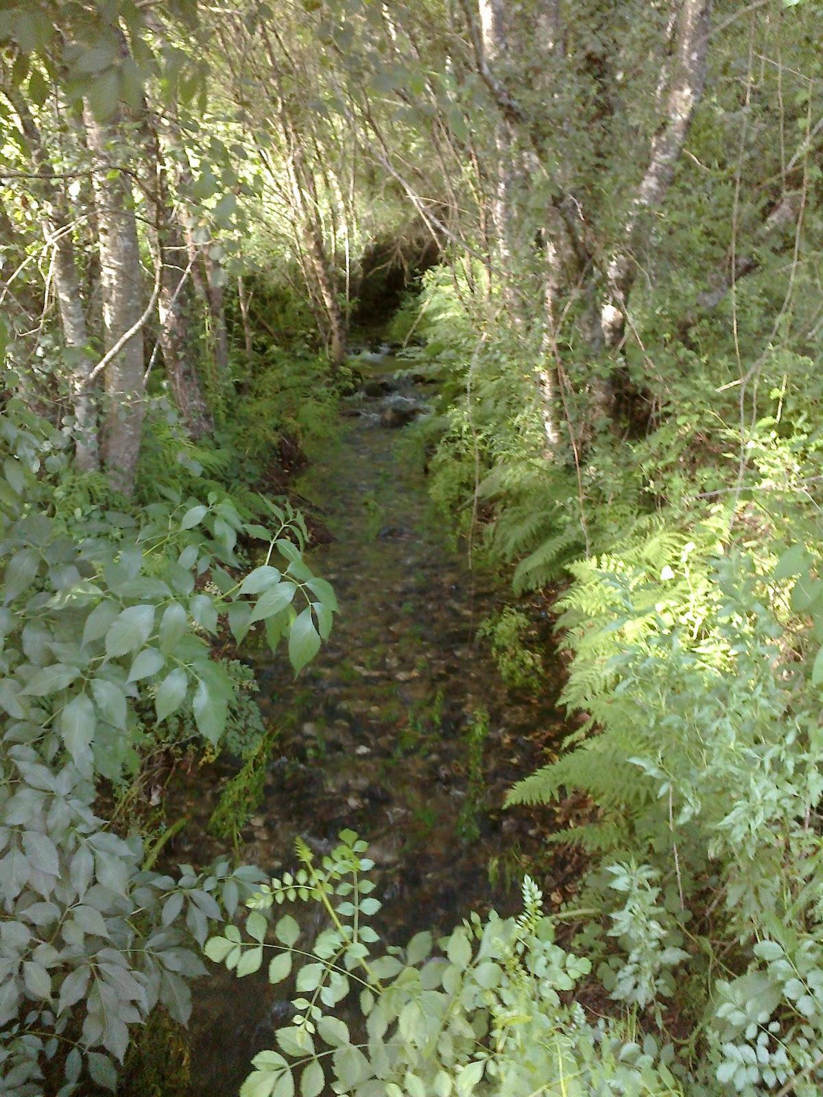 Río en la ruta de Riamonte en Ames