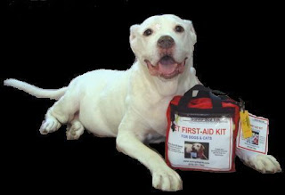 Basic Steps for Learning First Aids for Dogs