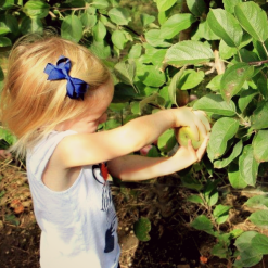 Apple Picking with small children and toddlers - tips and tricks