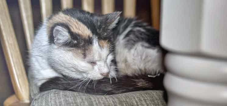Kucing sedang berehat