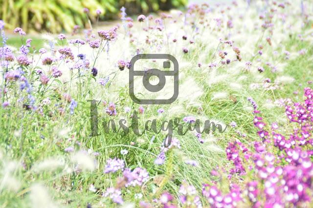 Les réseaux sociaux et moi: Instagram