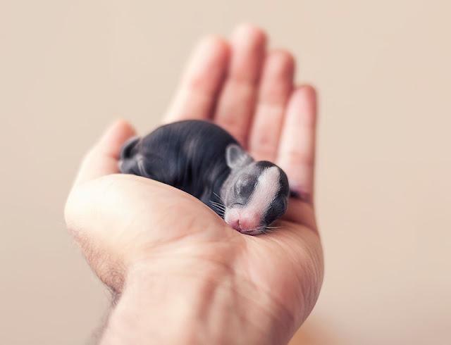 Fotógrafo registra os dez primeiros meses da vida de um coelho