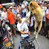 Pemotongan Anjing dijadikan Acara Tradisi Unik di China