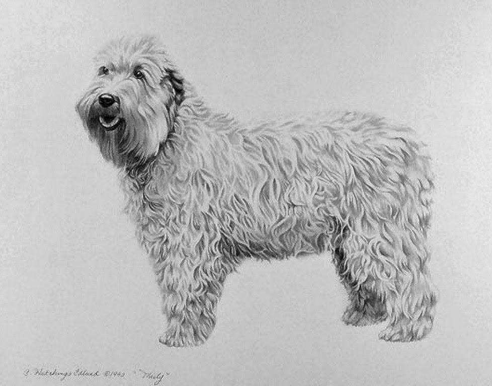 perros-dibujos-hechos-con-lapiz