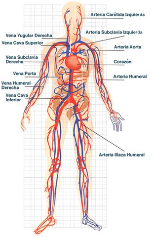 El Cuerpo Humano: Los Sistemas del Cuerpo Humano