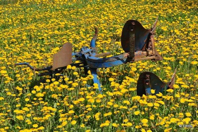 oublié dans les champs, Forgotten in the fields,  Забыто в полях.