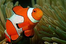 Gambar Ikan Laut Dalam Dan Ikan Laut Dangkal