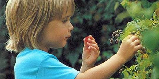 Plantas Tóxicas - Perigo para as crianças