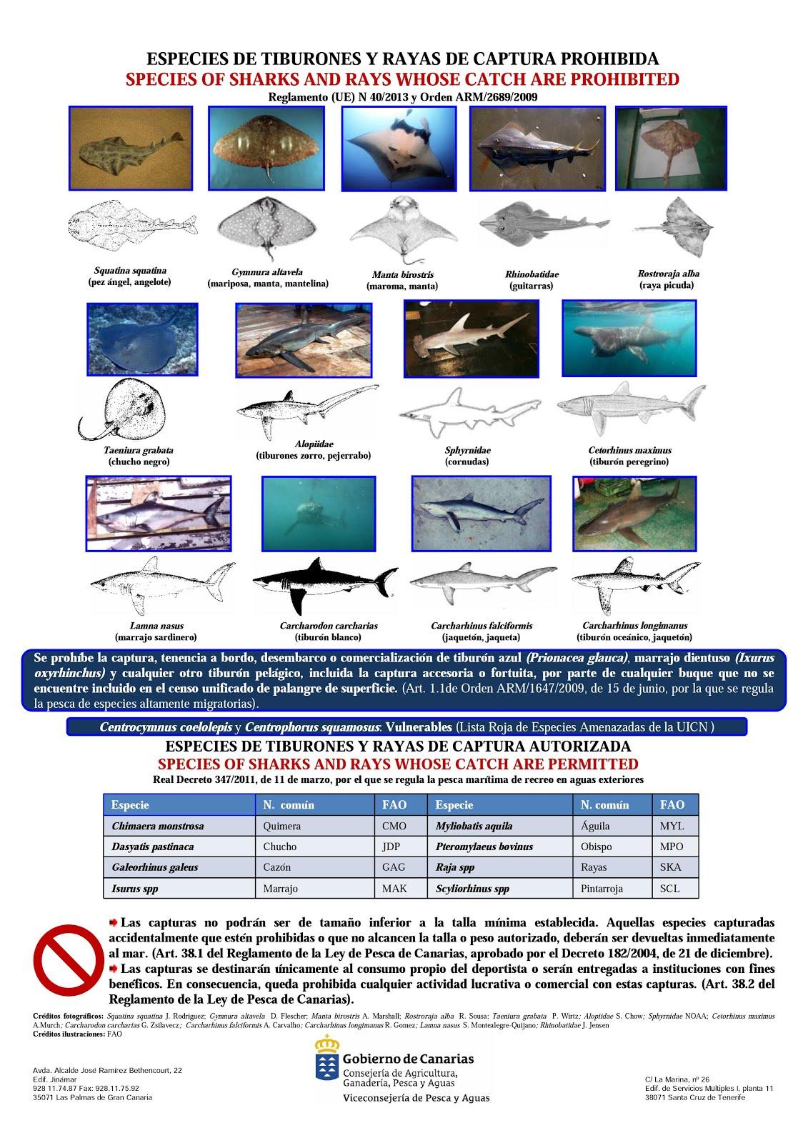 Diese Haie stehen unter Schutz