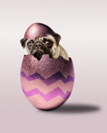 Dog in an easter egg