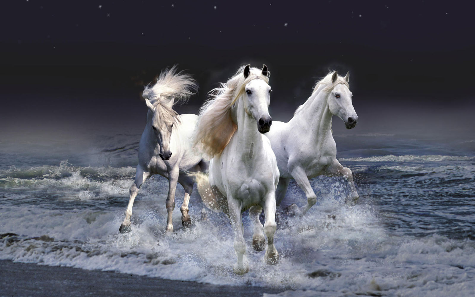 Must see   Wallpaper Horse Purple - Horses+Wallpapers+%25285%2529  Pictures_74576.jpg