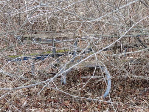 picnic table in a thicket