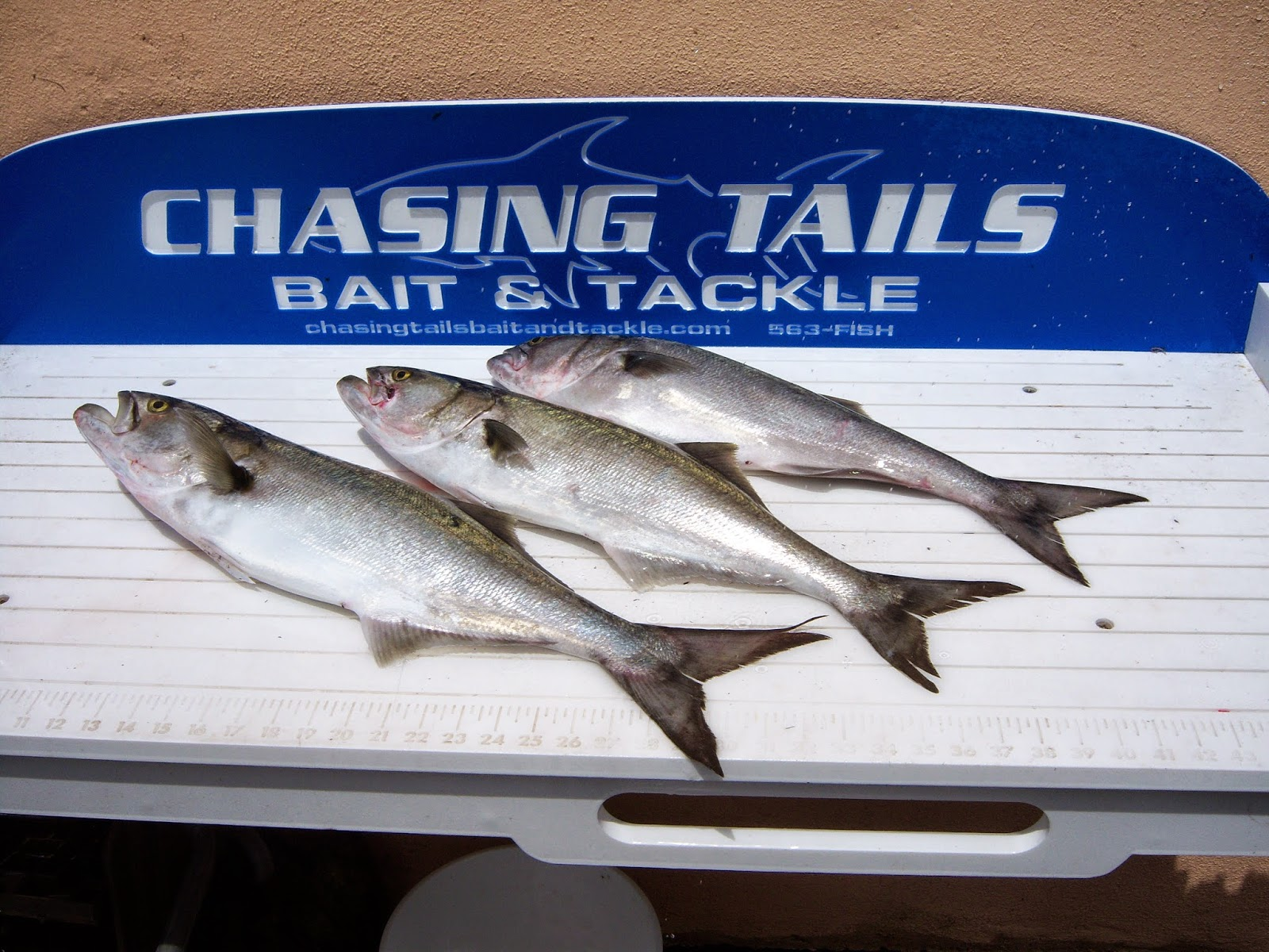 Dock action chasing tails bait tackle for Chasing tails fishing report